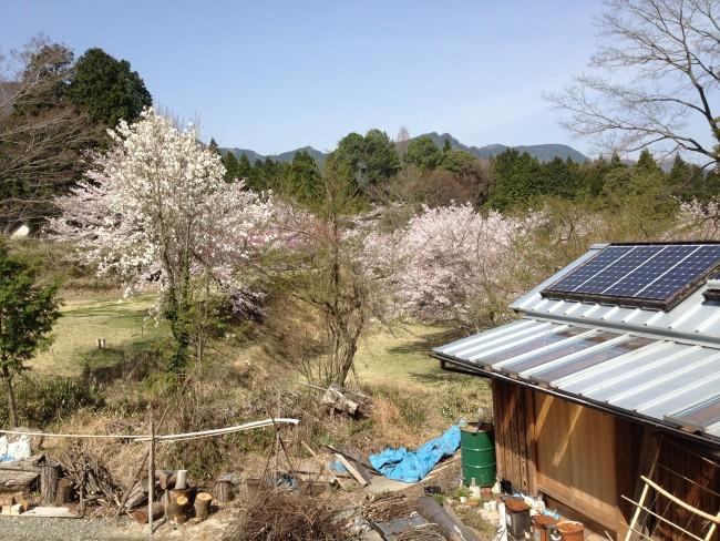 2014桜の季節