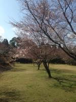 南阿蘇に春が来ました